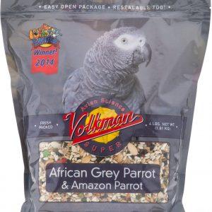 Volkman African Grey
